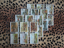 Cigarette Card : John Player : Old Hunting Prints (1938) : Full Set (EX)
