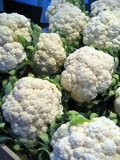 Cauliflower Seeds- Snowball Self-Blanching- 300+ 2019 Seeds   $1.69 Max Shipping