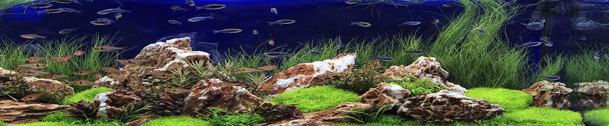Aquapflanzen24.de