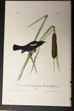 AUDUBON'S BIRDS of AMERICA - MARSH BLACKBIRD - First Edition Octavo Plate 214