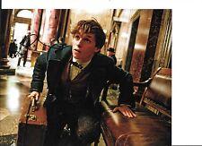 Eddie Redmayne As Newt Scamander SIGNED 8 X 10 Photo in Fantastic Beasts