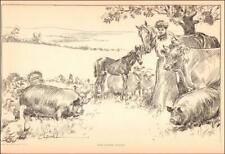 GIBSON GIRL ON FARM, COW, HORSE, PIG, SHEEP, CHICKENS, Charles Dana Gibson 1906