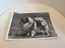 VINTAGE DOG SHOW CHAMPION WINNER TOY PHOTO POMERANIAN POM DOG WILLIAM GILBERT