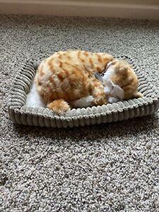 Perfect Petzz Orange Tabby Cat Lover Breathng Cat Stuffed Pet Cat Birthday Gift