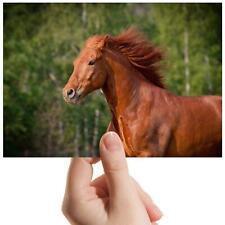 "Magnificent Running Horse - Small Photograph 6"" x 4"" Art Print Photo Gift #15738"
