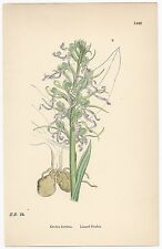 Sowerby. Lizard Orchis. Hand Colored Print. Over 100 years old! #1448