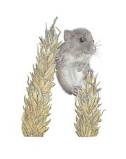 """Harvest Mouse Limited Edition Print Mounted 10""""x12"""" Print Art, signed by artist"""