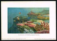 1900 Prehistoric Corals Anemones Marine Life Fishes, Antique Print - H.Harder
