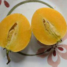 Solanum muricatum aka Pepino Melon Garden Melon Pear Sweet Cucumber 1 Live Plant