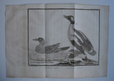 Oiseaux SARCELLE LOUISIANE Saint Domingue GRAVURE MARTINET XVIIIeme siecle IN4