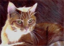 BCB Orange Tabby Cat Colored Pencil Portrait Print of Painting ACEO
