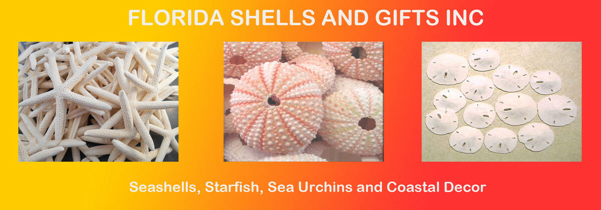 Florida Shells and Gifts Inc.