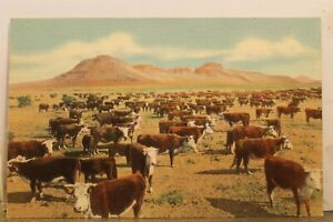 Scenic Great Southwest Land of Sunshine Herefords Round Up Time Postcard Old PC
