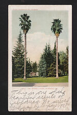c1906 house behind Two Stately Palms Riverside California postcard