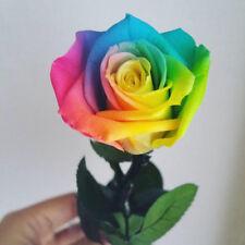 200Pcs Rainbow Rose Seeds Bonsai Plant Tree House Herb Garden Flower Pot Decor