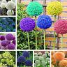 Egrow 100 PCS Garden Exterieurs Giant Allium Giganteum Beau Fleur Graines