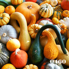 MIX OF GOURDS - 25 Seeds - Ornamental gourds - Cucurbita Pepo - squash seeds
