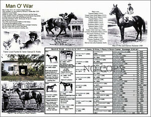 Race Horse Man O' War picture pedigree one of the greatest. 11 X 8.5