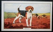 BEAGLE  PACK    Original  Vintage Coloured Card  VGC