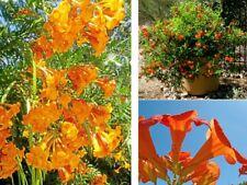 Duftpflanzen Samen Set blühende duftende schnellwüchsige Pflanzen für das Zimmer