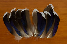 Mallard McGinty Quill, Natural for Fly Tying