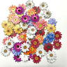 50pcs Flower Shape Buttons Wooden Sewing 2-holes Scrapbooking Button Crafts