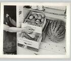 REFRIGERATOR Ad w Produce Home Appliances Homemakers Consumer 1941 Press Photo photo