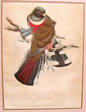 Gould Birds TROGON MEXICANUS Antique Hand-Colored Lithogrpah 1838