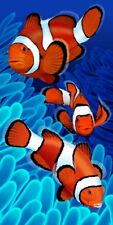 Clownfish Aquatic Velour Beach Bath Towel 30x60