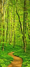 Türtapete Waldpfad TT244 Größe 90x200cm Wald Baum Natur Tapete Weg