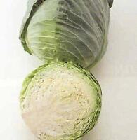 Cabbage Golden Cross Vegetable Seeds