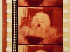 WALT DISNEY'S THE SHAGGY D.A. ORIGINAL 1976 35mm MOVIE FILM TRAILER
