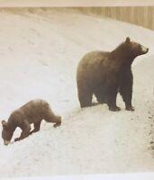 Postcard, Bear, Mama Bear And Cub, Wild Animals, Vintage, P37