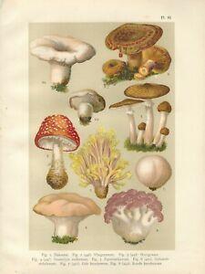 Stampa antica FUNGHI AMANITA ARMILLARIA LACTARIUS  botanica 1919 Antique print