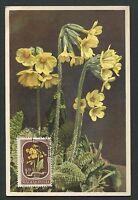 UNGARN MK 1951 FLORA SCHLÜSSELBLUME FLOWER MAXIMUMKARTE MAXIMUM CARD MC CM d2484