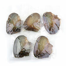 5PCS Wrapped Akoya Oysters with Large Pearls in Oyster  akoya of 7.5- 8mm