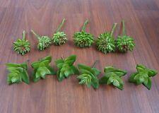 Artificial Miniature Succulents Grass Set of 12 Lotus Stone Plants Landscape