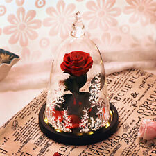 Beauty And The Beast Enchanted LED Real Rose Glass Dome Lighted Gifts for Mother