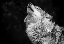 Framed Print - Black & White Wolf Howling at the Moon (Picture Poster Animal)