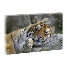 Deko-Bilder & -Drucke mit Tier-Motiv fürs Kinderzimmer