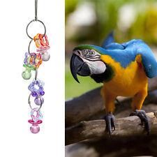 Acrylic Pet Bird Bites Toy Parrot Macaw Parrot Bites Play Interactive Toys