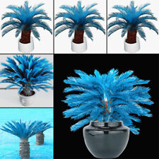 100 Pcs Blue Sago Palm Tree Seeds Cycad Bonsai Planting Home Garden Decor Showy