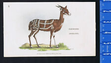 Harnessed Antelope 1801 Mammal Color Antique Lithograph