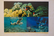 Port Douglas - Australia - Quicksilver - Collectable - Postcard.