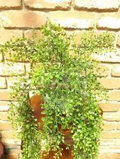 MINI MAIDEN HAIR ARTIFICIAL HANGING FERN PLANT PLASTIC NEW POT NOT INCLUDED