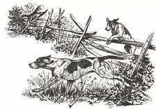 * Foxhound - 1964 Dog Art Print - Matted