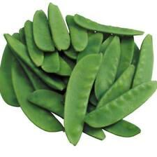20 pcs Snow pea (Pisum sativum) Vegetable Seeds