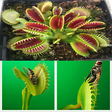 Egrow 100Pcs Catchfly Potted  Seeds Garden Venus Fly Trap Insectivorous Plant
