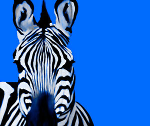 Zebra Blue By Ricky Dean Art Paper or Canvas Print