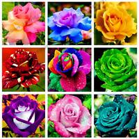 200 PCS Seeds Rare Holland Rainbow Rose Flowers Bonsai 24 Color Plants 2019 New